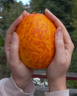 mysterious orange dappled sour melon