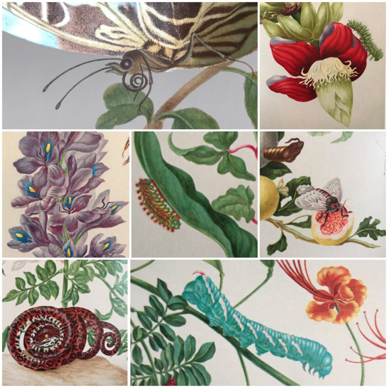 collage of details from Marian Merian's Butterflies