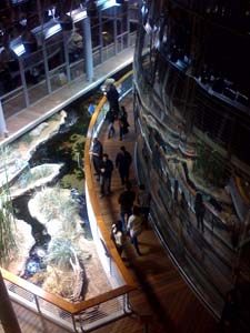 outside of dark rainforest dome at California Academy of Science during Nightlife