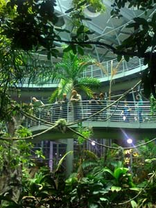 rainforest exhibit at California Academy of Science during Nightlife