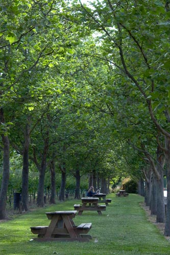 row of park picnic tables between two rows of trees in Sonoma