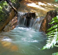 small waterfall in creek above Berry Falls, Big Basin State Park