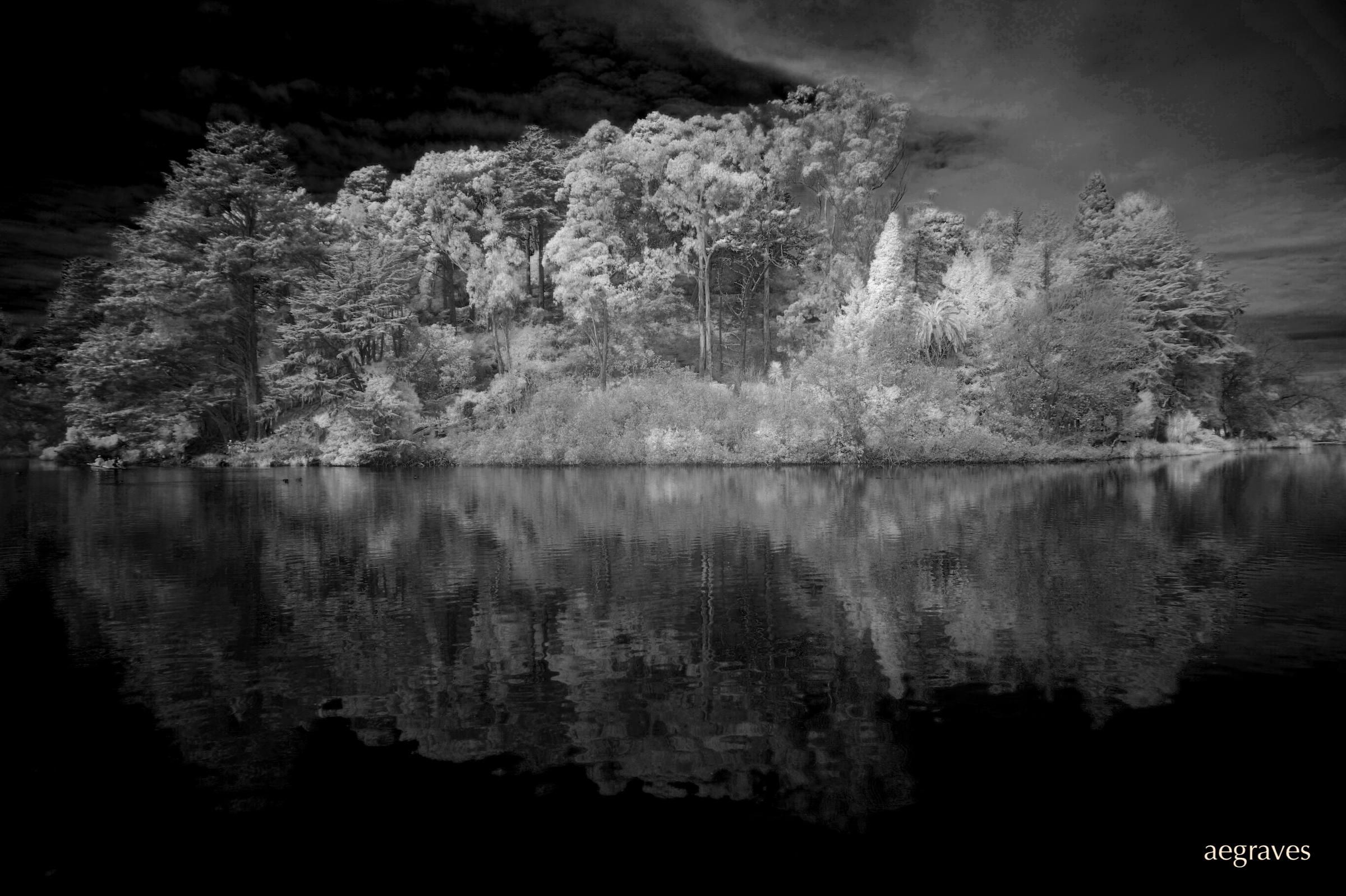Infrared photo of the island in Stow Lake, San Francisco, by A.E. Graves