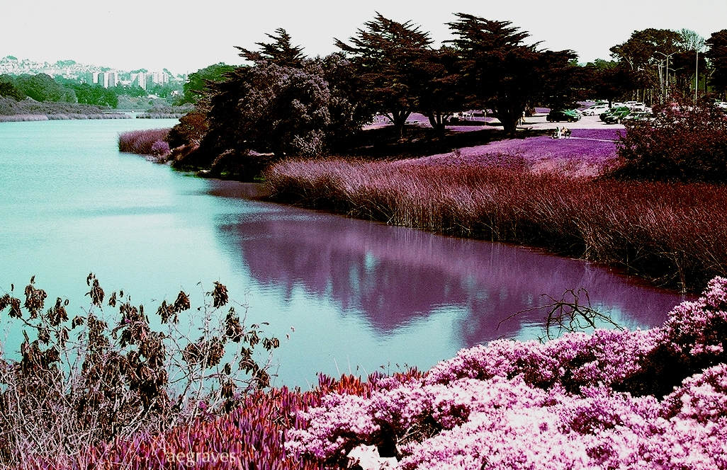 detail from photo Lake Merced in Lomochrome Purple by A.E. Graves